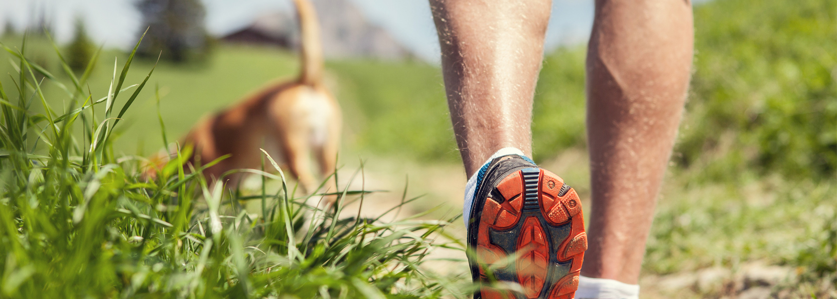 Walker_Trainers_Dog_1680px