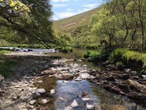 River Barle in Spring