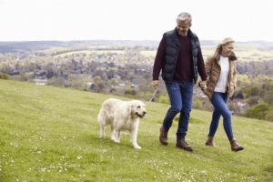 Dog walks on Exmoor