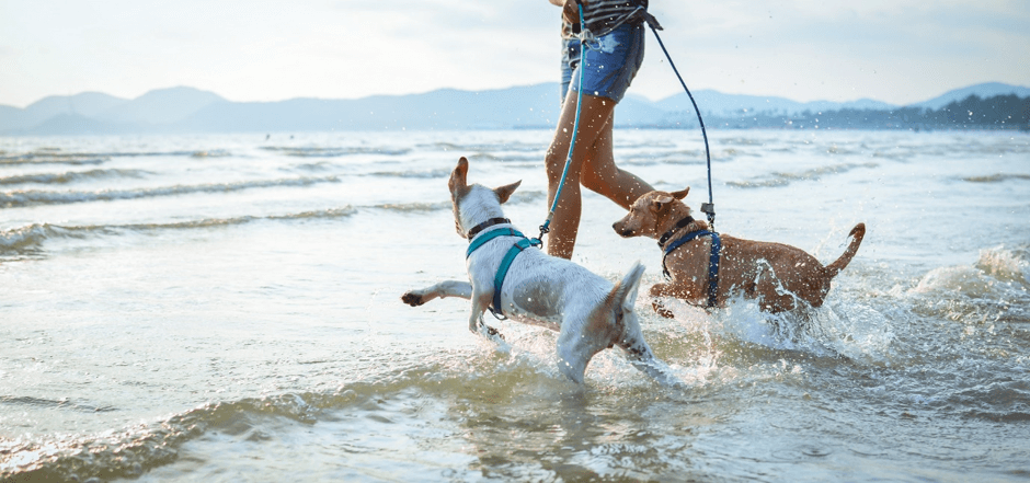 Dog Friendly Luxury Holiday Cottages - Pooch Paradise